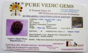 6 Mukhi Rudraksha Certificate