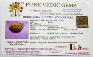1 mukhi rudraksha certificate