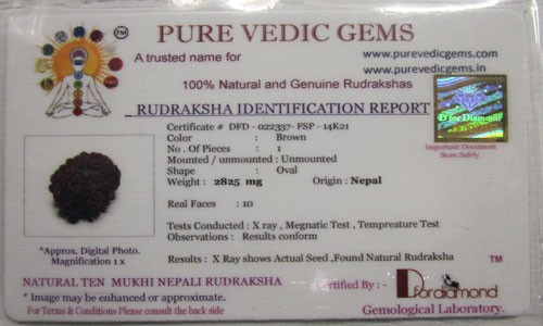 Rudraksha Certificate