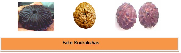 rudraksha 1