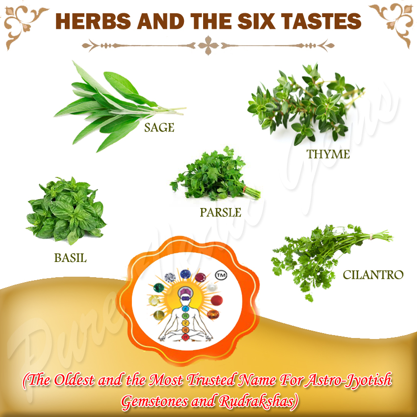 herbs and the six tastes copy